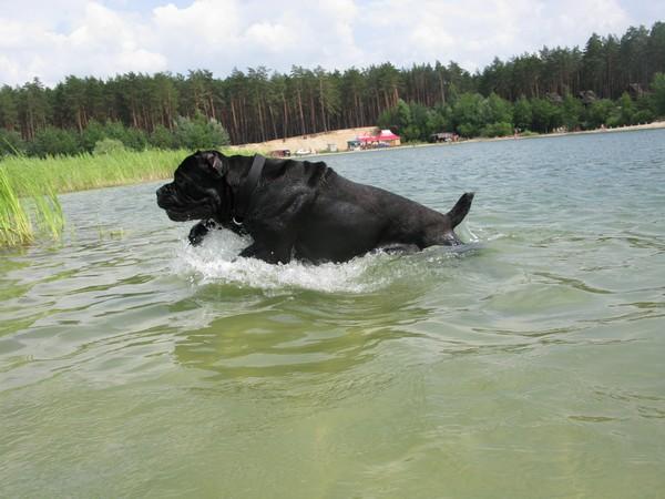Аякс на озере